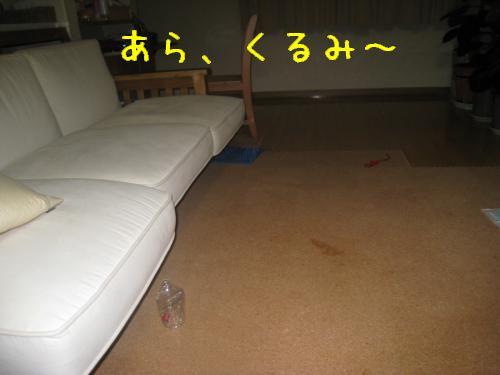 IMG_0347_convert_20080515222611.jpg