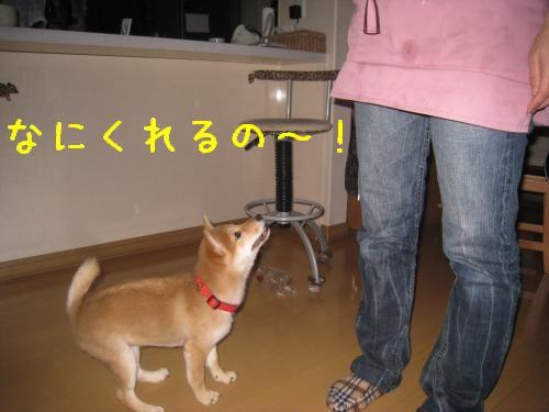 IMG_0649_convert_20080605224945.jpg