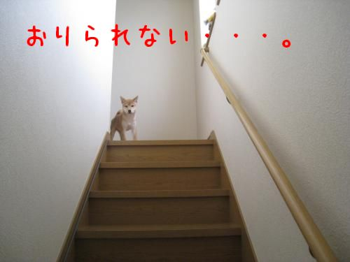 IMG_0756_convert_20080624220833.jpg