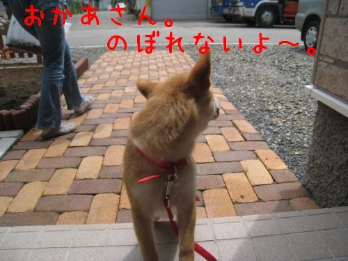 IMG_0772_convert_20080624220751.jpg