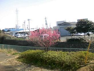 200322芝川桃