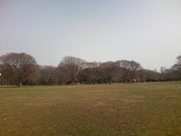 200406代々木公園広場