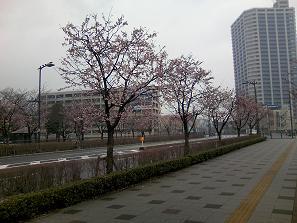 200413川口元郷桜