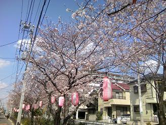 200427自宅桜