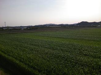 200524菊川風景2