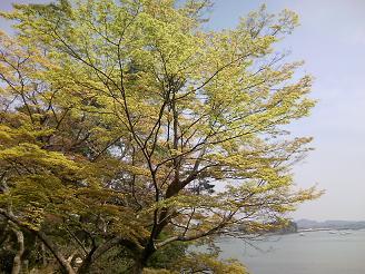 200701松島海木