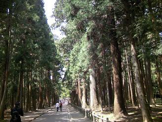 200701松島寺林