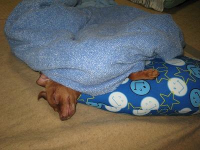 よく寝てる