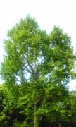 tree1_20080615003501.jpg