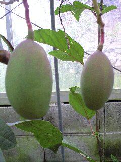 mango0628 2