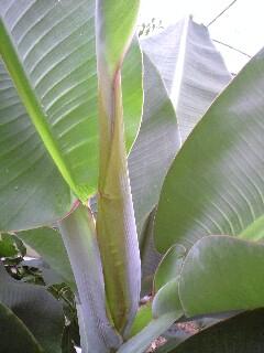 banana3gou0628 2