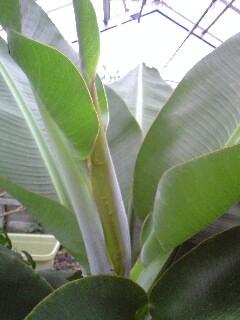 banana3gou0628 4