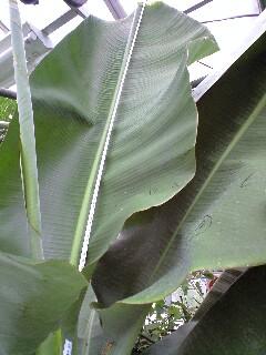 banananigou0628 3