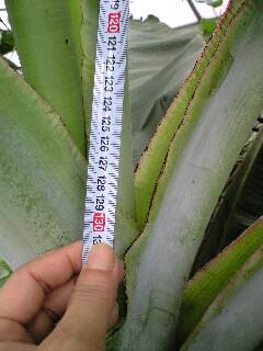 banananigou0628 2