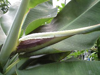 banana0701 2