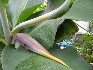 banana3gou0702 1