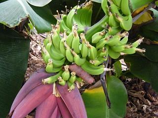 bananaen0704 2