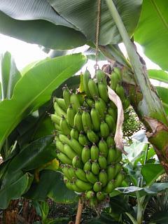 bananaen0704 4