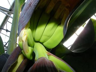 banana0705 5