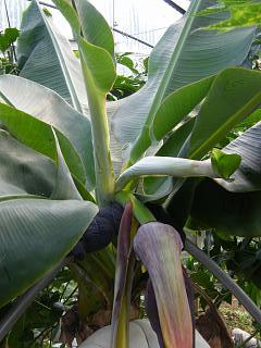 banana0705 3
