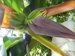banana3gou0707 1