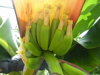 banana3gou0707 3