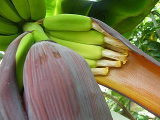 banana3gou0707 4