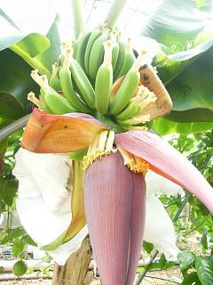 banana3gou0714 3