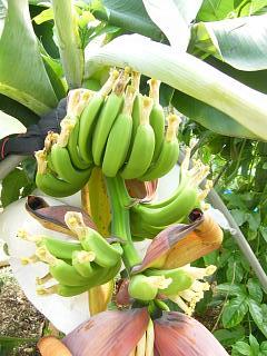 banana3go0714 2