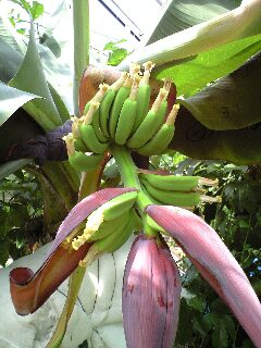 banana0710.jpg