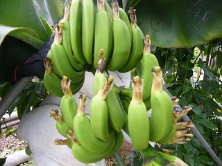 banana0720.jpg