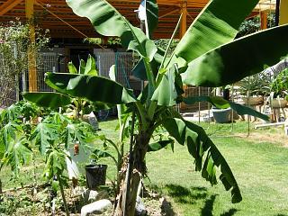 banana0728.jpg