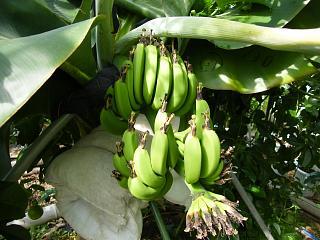 banana1gou0727.jpg