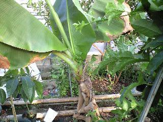 banana3gou0324.jpg