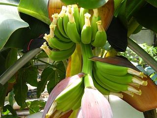 banana3gou0709.jpg