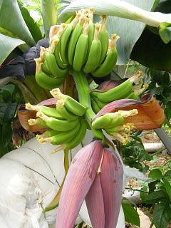 banana3gou0712.jpg