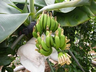 banana3gou0718.jpg
