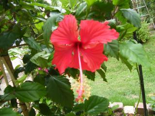 haibisukasu0718_convert_20080718124743.jpg