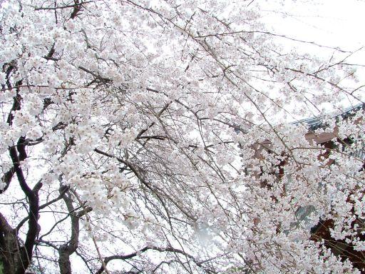 醍醐寺 032_512