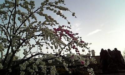 080411_上野の紅白梅.