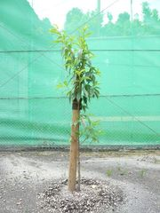 植樹!!!