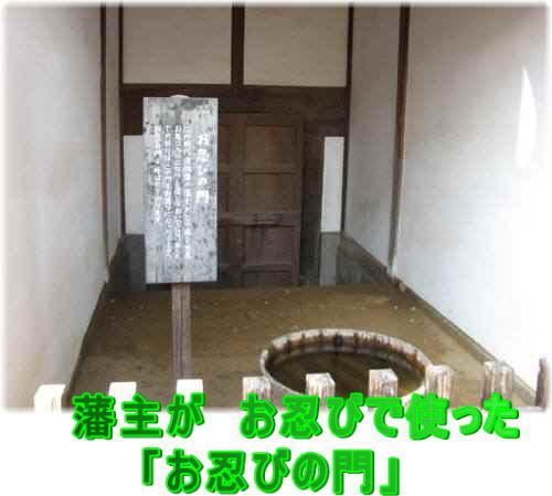 IMG_5849sinobi.jpg