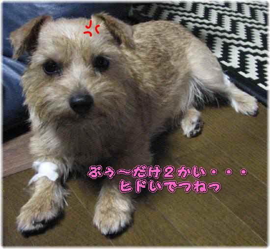 IMG_6268-p.jpg