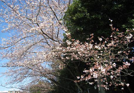 2008033138.jpg