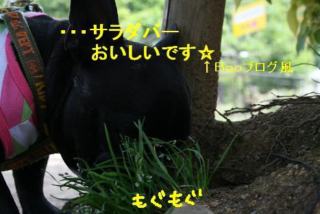 2008042727.jpg
