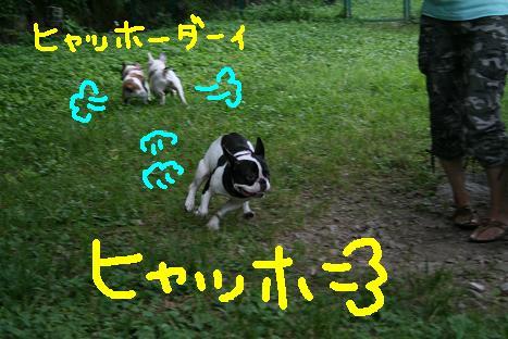 2008072141.jpg