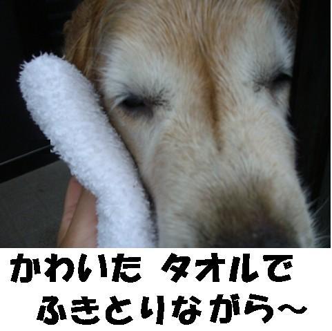 imite3.jpg
