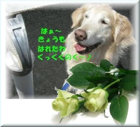qoochan2.jpg