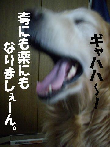 tuusinnbo4.jpg