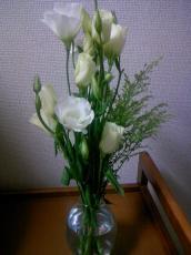 お花のその後